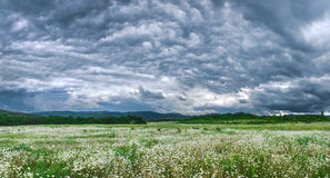 Dark black clouds in the sky promise rain. Over flower meadow. Panoramic picture. Dark black clouds in the sky promise rain. Over flower meadow. Panoramic Stock Photography