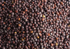 Dark (black) mustard seeds - close up view Royalty Free Stock Photo