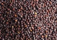 Dark (black) mustard seeds - close up view Royalty Free Stock Photo