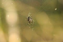 Dark black spider Stock Images