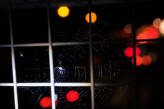 Dark black spider in a web with over Motorway Royalty Free Stock Images