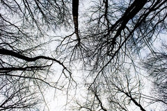 Dark, black, spooky tree in forest on a sky background Royalty Free Stock Photo