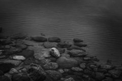 Dark black and white image of rocks at the bottom of the sea stock photos