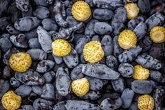 The dark blue berries of honeysuckle and white strawberries Stock Photo