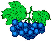 Dark blue berry. Illustration of the dark blue berry Stock Image