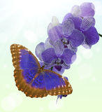 Dark blue butterfly and orchid blossom on light background Stock Images