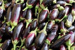 Dark blue eggplant Stock Photos