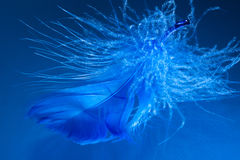 Dark blue feather. On a glass Stock Images