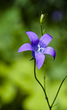 Dark blue flower Stock Photography