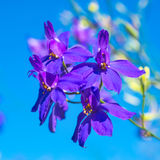 Dark-blue flowers on the clear blue sky Stock Photo