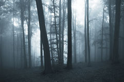 Dark blue fog in a thick forest Royalty Free Stock Image