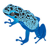 Dark blue frog Royalty Free Stock Images