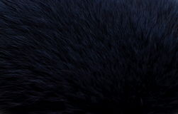 Dark blue fur Stock Image