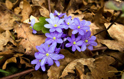 Dark blue glade Stock Photography