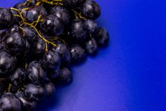 Dark blue grapes on a bright blue background stock images