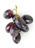 Dark blue grapes Stock Image