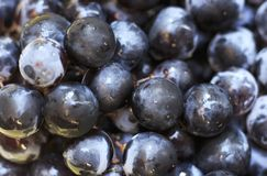 Dark blue grapes close-up, texture, background royalty free stock image