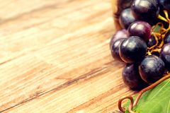 Dark blue grapes Stock Photography