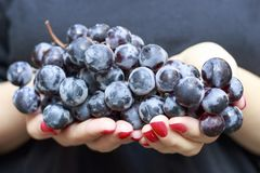 Dark blue grapes in female hands close-up stock images