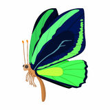 Dark blue-green butterfly icon, cartoon style Stock Images
