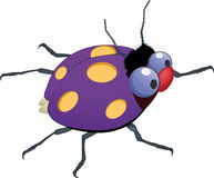 Dark blue ladybird Stock Photography