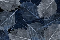 Dark blue leaf skeleton background Royalty Free Stock Images