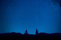 Dark blue night sky above mystery forest Stock Photo