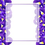 Dark Blue Purple Iris Flower Banner Card. Vector Illustration.  vector illustration