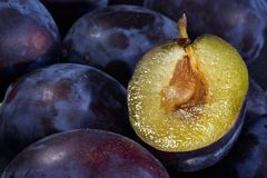 Dark blue ripe fleshy plums Stock Photos
