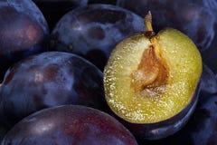 Dark blue ripe fleshy plums stock photos