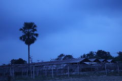 Dark blue stormy cloudy sky under a tree and farm at sunset time Stock Photography