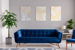 A dark blue velvet couch in front of a gray wall with graphic paintings in a modern living room interior. Real photo. A dark blue velvet couch in front of a stock photo