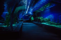 Inside view from Oceanarium tunnel royalty free stock photo