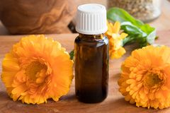 A bottle of calendula essential oil with fresh calendula flowers Stock Photography