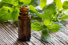 A dark bottle of melissa essential oil with fresh melissa twigs. A dark bottle of melissa lemon balm essential oil with fresh melissa twigs in the background royalty free stock images