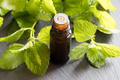 A bottle of melissa essential oil with fresh melissa leaves on a. A dark bottle of melissa lemon balm essential oil with fresh melissa leaves in the background stock photos