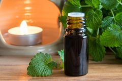 A dark bottle of melissa essential oil with fresh melissa twigs. A dark bottle of melissa lemon balm essential oil with fresh melissa twigs and an aroma lamp in stock photography