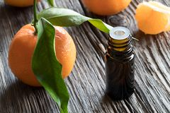 A dark bottle of tangerine essential oil on a wooden table. With fresh whole tangerines and tangerine wedges in the background Stock Image