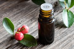 A dark bottle of wintergreen essential oil on a wooden backgroun. A dark bottle of wintergreen essential oil on old wood, with wintergreen berries and leaves in Royalty Free Stock Photography
