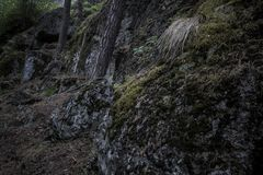 Dark boulders covered in moss in the woods with trees growing up. Large stones in the woods awaiting storm stock image
