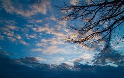 Dark branches against the backdrop of gloomy winter sunset sky i. Dark branches against the backdrop of gloomy winter sunset blue sky in the clouds Stock Photo