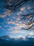 Dark branches against the backdrop of gloomy winter sunset sky i. Dark branches against the backdrop of gloomy winter sunset blue sky in the clouds. Horizontal Royalty Free Stock Images