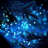 The dark branches of the Christmas tree. Beautiful dark branches of the Christmas tree on a background blue glitter lights festive lights. There is plenty of Royalty Free Stock Photos