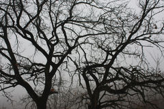 Dark branches Royalty Free Stock Images