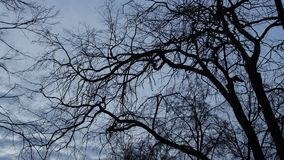Dark branches of trees against the backdrop of a bright sky and clouds, contrast. stock footage