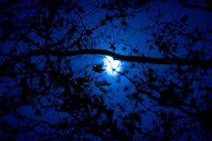 Dark branches, twigs, and leaves against the dark blue sky on a moon-lit night stock photos