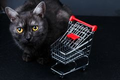 Cat near empty shopping basket stock photo