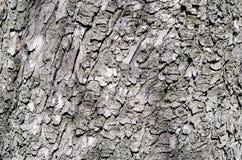 Dark brown bark of chestnut tree stock photography