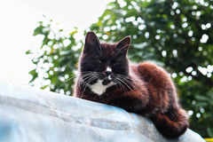 A dark brown cat lay down and looking at you Royalty Free Stock Images