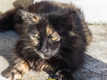 Dark brown cat lying on the street and basking. In the sun royalty free stock image